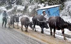Không khí lạnh tăng cường, vùng núi phía Bắc có nơi rét đậm