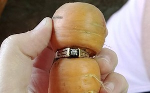 """Chiếc nhẫn """"bám"""" vào củ cà rốt"""