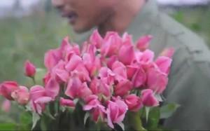 Để trồng hoa làm giàu, không ít người dân Tây Tựu phải thế cháp sổ đỏ vay ngân hàng