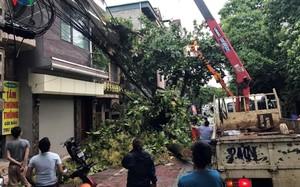 TP Lào Cai: Cây đổ ngổn ngang vì giông lốc dữ dội
