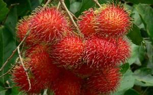 Sau xoài, thanh long tươi thì quả chôm chôm sẽ được nhập khẩu vào thị trường New Zealand trong năm 2017.