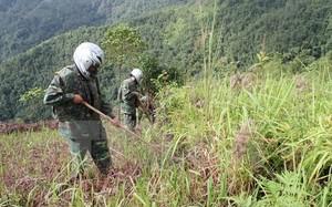Hoạt động rà phá bom mìn tại Việt Nam.