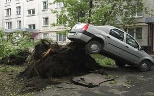 Một cây lớn bị bật gốc sau khi bão tràn qua thủ đô Moskva.