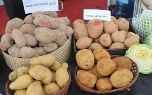 Khi mua khoai tây, người tiêu dùng phải chú ý tới một số đặc điểm cơ bản để phân biệt giữa khoai tây Trung Quốc và Đà Lạt để trách sự nhầm lẫn
