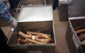 Đánh tráo 150 kg ngà voi: Cán bộ bị khởi tố, lãnh đạo bị kiểm điểm