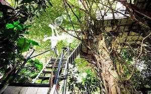 Những ngôi nhà trên cây ở Việt Nam