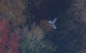 Phi công Việt Nam hy sinh trong tai nạn máy bay ở Anh