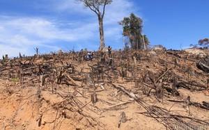 Hiện trường vụ phá rừng ở tiểu khu 1, xã An Hưng (huyện An Lão)