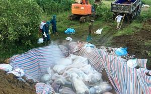 Sau 2 ngày nỗ lực, toàn bộ gần 6.000 xác lợn chết đã được huyện Yên Định xử lý.