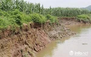 """Nhiều héc ta ruộng, hoa màu của người dân hai bờ sông Đông Mai bị """"nuốt trôi"""""""