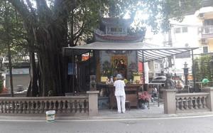 Ngôi miếu và cây đa nằm giữa đường Vũ Trọng Phụng