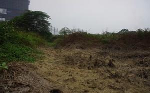 Nhiều cây bụi và cỏ dại không chịu nổi đã chết khô.