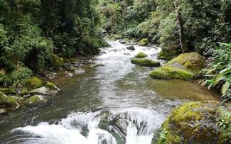 Quần thể rừng, sông và thác nước trong Khu dự trữ sinh quyển Savegre