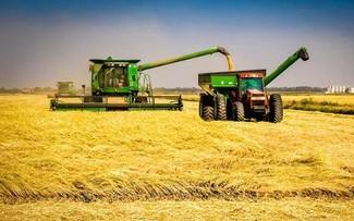 Gạo Mỹ sẽ được xuất khẩu sang Trung Quốc lần đầu tiên