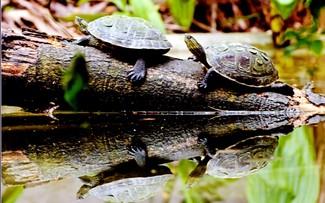 Thiên nhiên tuyệt đẹp trong Vườn quốc gia Cúc Phương