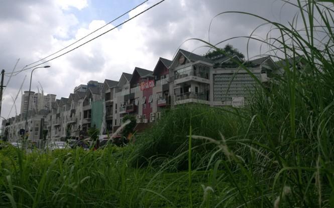 Hà Nội, sẽ không cắt cỏ đại trà mà để kinh phí đầu tư hạ tầng xã hội, phục vụ dân sinh