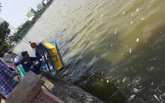 Video: Cá chết trắng Hồ Tây
