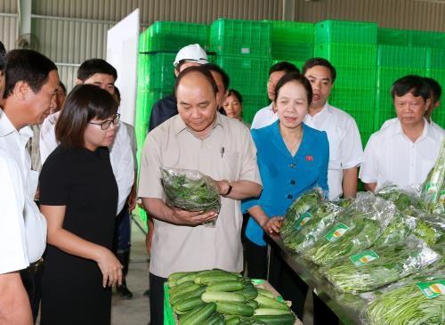 VinEco và văn hóa làm nông nghiệp an toàn - ảnh 2