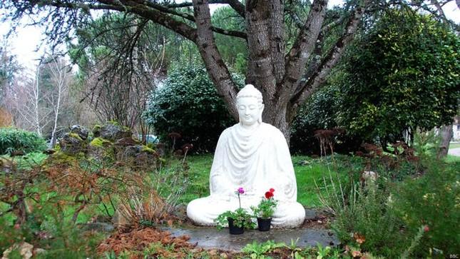 Nhân Lễ Phật đản kể chuyện Làng Mai... - ảnh 2