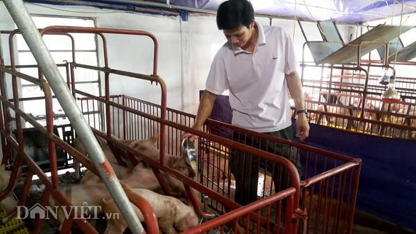 Lợn giống giảm còn 100.000đ/con, dân giết thịt nuôi chó, mèo - ảnh 1