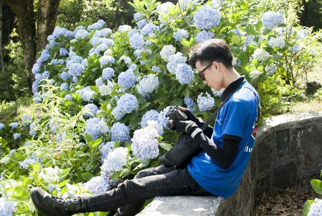 Vườn hoa cẩm tú cầu cách Hà Nội hơn 200km   - ảnh 4