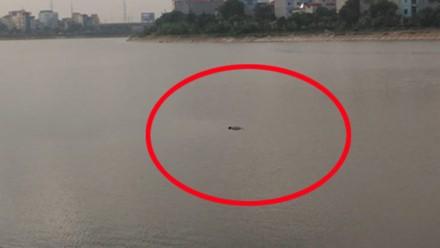 Phát hiện một thi thể nổi giữa hồ Linh Đàm - ảnh 1