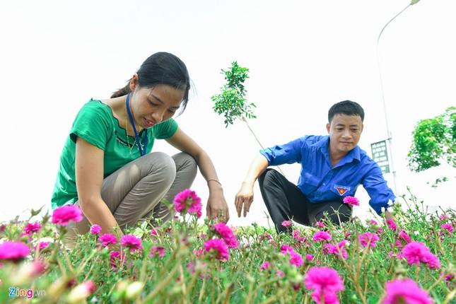 Ngắm đường hoa mười giờ độc đáo nhất Hà Nội - ảnh 4