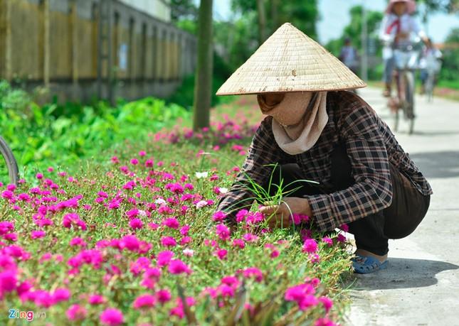Ngắm đường hoa mười giờ độc đáo nhất Hà Nội - ảnh 5