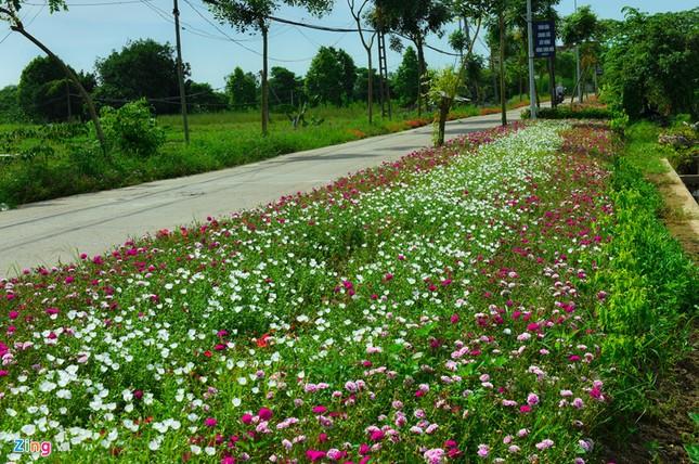 Ngắm đường hoa mười giờ độc đáo nhất Hà Nội - ảnh 3