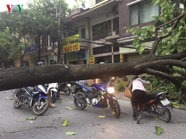 TP Lào Cai: Cây đổ ngổn ngang vì giông lốc dữ dội - ảnh 3