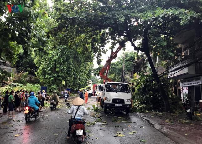 TP Lào Cai: Cây đổ ngổn ngang vì giông lốc dữ dội - ảnh 6