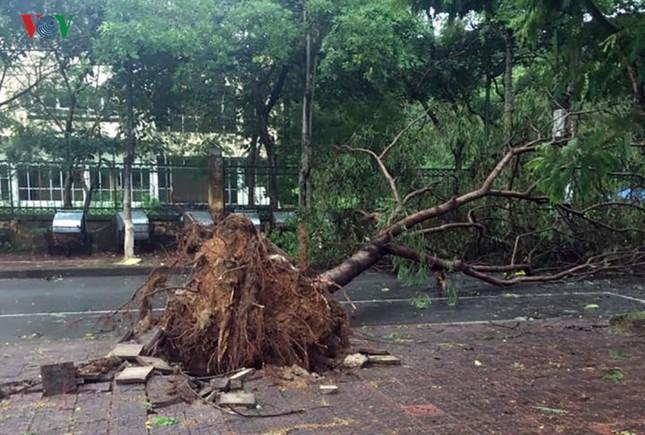 TP Lào Cai: Cây đổ ngổn ngang vì giông lốc dữ dội - ảnh 2