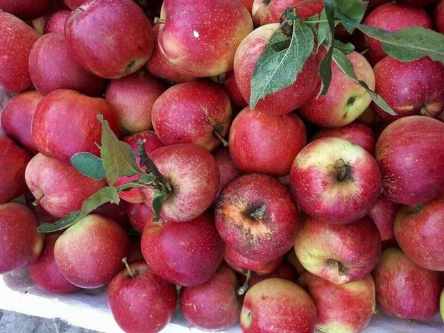 6 loại trái cây Trung Quốc đang tràn ngập chợ Việt Nam - ảnh 1