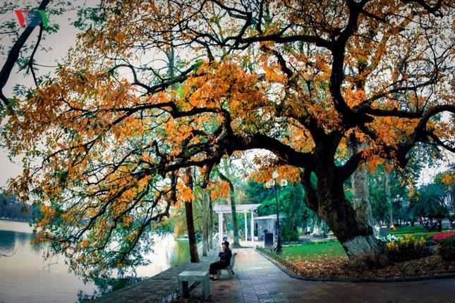 Hồ Gươm quyến rũ trong hương sắc mùa thu - ảnh 3