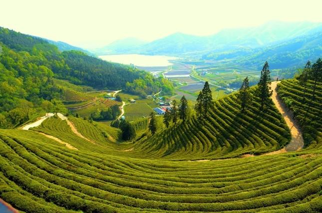 14 nơi không đi thì phí cả chuyến tham quan Hàn Quốc - ảnh 1