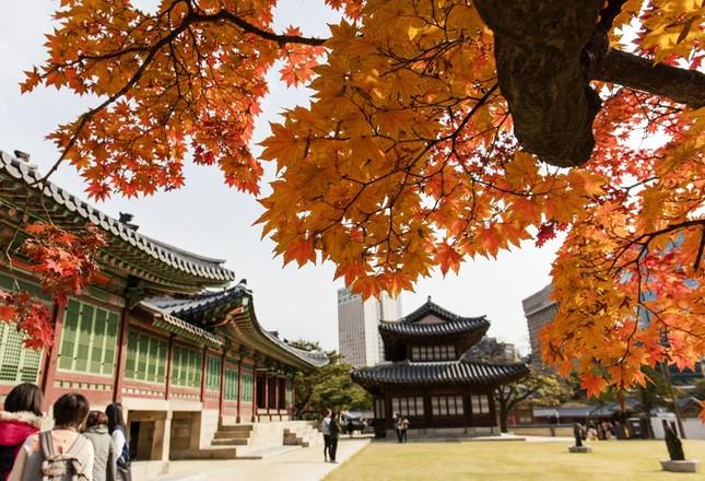 14 nơi không đi thì phí cả chuyến tham quan Hàn Quốc - ảnh 6