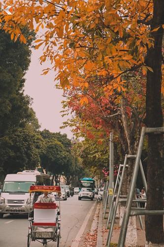 Giới trẻ Hà Nội tự hào với mùa thay lá đẹp chẳng kém Hàn Quốc - ảnh 7