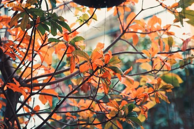 Giới trẻ Hà Nội tự hào với mùa thay lá đẹp chẳng kém Hàn Quốc - ảnh 1