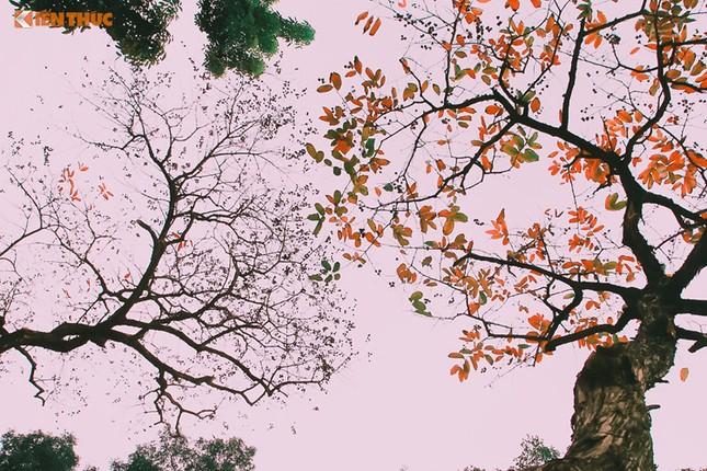 Giới trẻ Hà Nội tự hào với mùa thay lá đẹp chẳng kém Hàn Quốc - ảnh 2