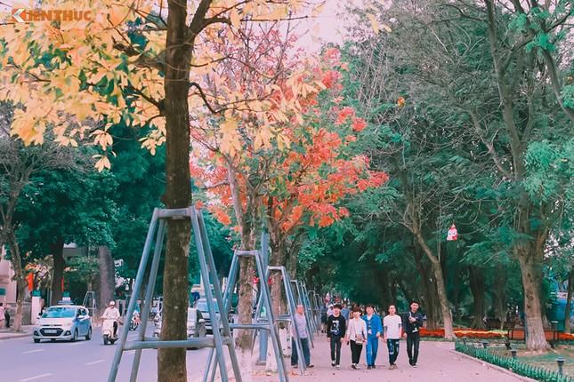 Giới trẻ Hà Nội tự hào với mùa thay lá đẹp chẳng kém Hàn Quốc - ảnh 6