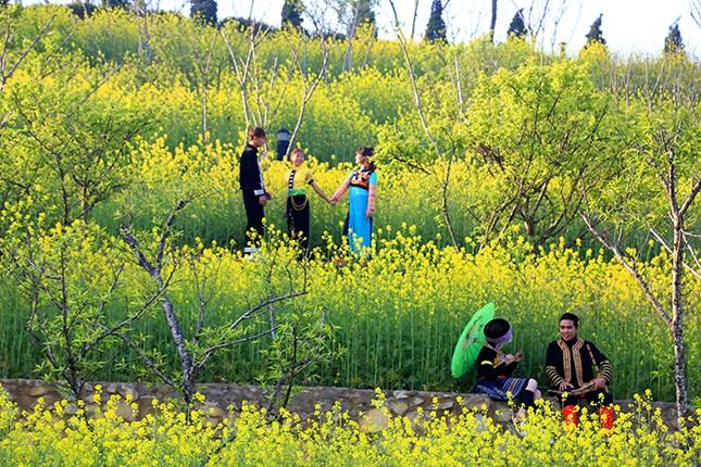 Mải mê 'sống ảo' với thảm hoa cải vàng đẹp mê hồn ở Sun World Fansipan Legend - ảnh 2