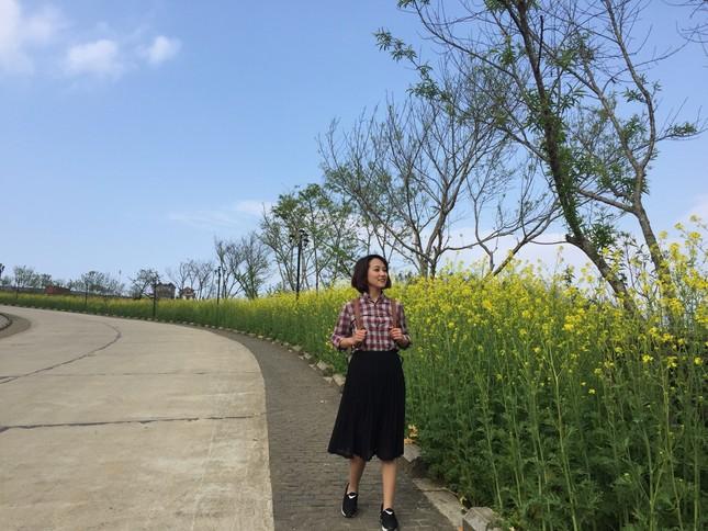 Mải mê 'sống ảo' với thảm hoa cải vàng đẹp mê hồn ở Sun World Fansipan Legend - ảnh 3