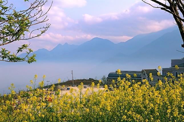 Mải mê 'sống ảo' với thảm hoa cải vàng đẹp mê hồn ở Sun World Fansipan Legend - ảnh 6