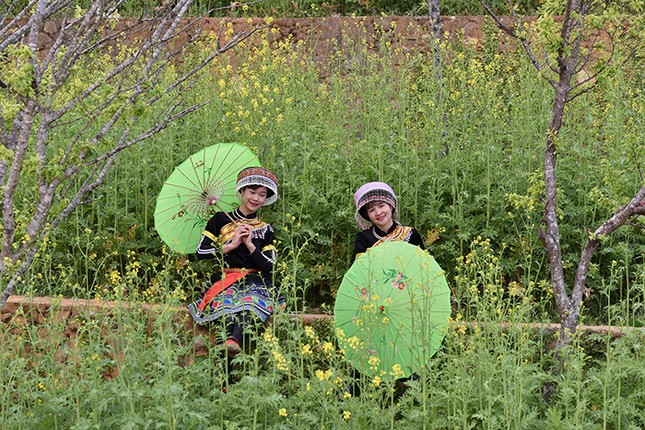 Mải mê 'sống ảo' với thảm hoa cải vàng đẹp mê hồn ở Sun World Fansipan Legend - ảnh 7