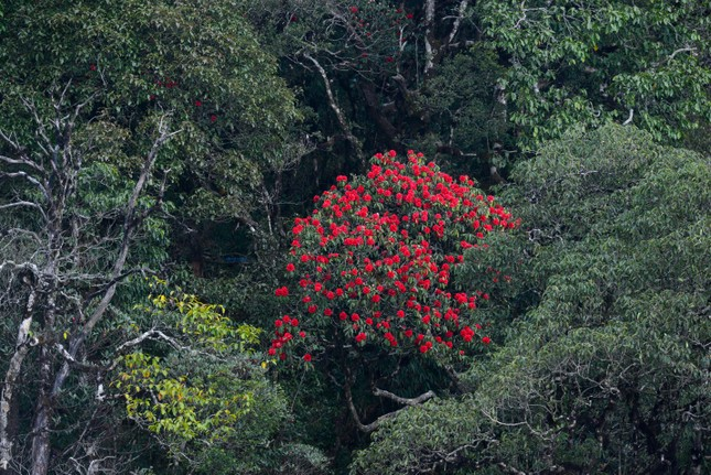 Mải mê 'sống ảo' với thảm hoa cải vàng đẹp mê hồn ở Sun World Fansipan Legend - ảnh 8