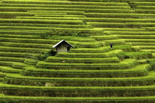 Việt Nam đẹp lung linh qua ống kính của nhiếp ảnh gia Pháp - ảnh 2