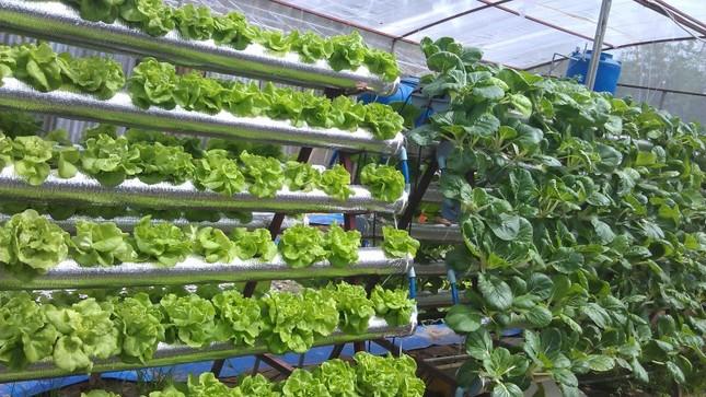 Gieo trồng rau và ngồi chờ… thu hoạch - ảnh 1