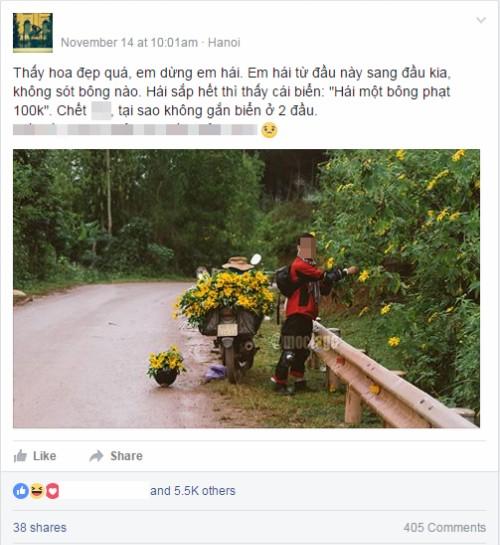 Nam phượt thủ vặt sạch hoa dã quỳ bên đường gây bão mạng  - ảnh 1