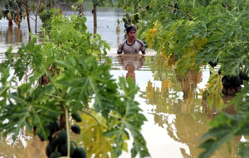Mưa lớn và thủy điện xả lũ, hạ du Quảng Nam ngập sâu - ảnh 1