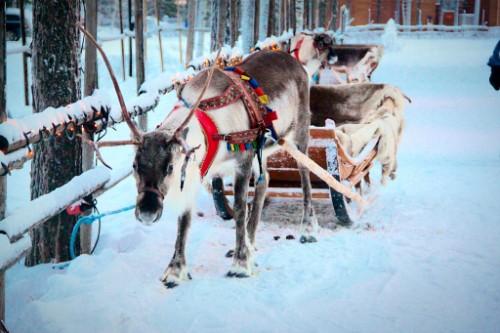 Khách Tây vỡ mộng về làng ông già Noel ở Phần Lan - ảnh 1